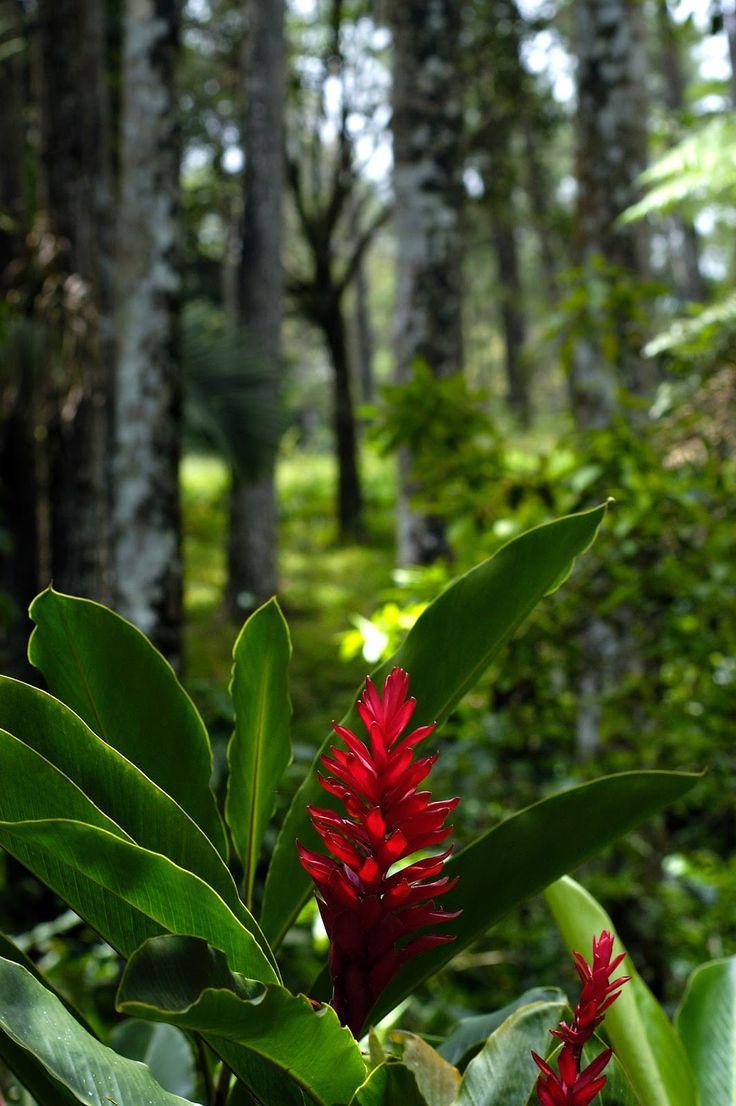 Tropical Flower in Dominican Republic 9 best