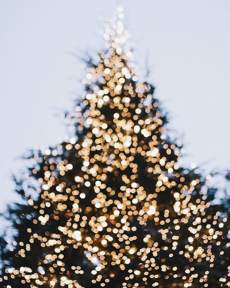 """Our town tree stops me in my tracks every single year  especially when it's gussied up with different sized white lights!  I sure do love Christmas. ☃…"""
