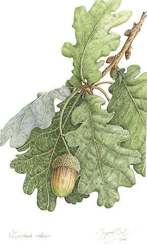 "Oak Reminds me of my Grandad's house called ""The Acorns"""