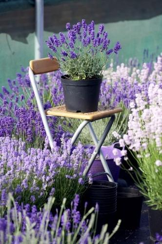 Für Balkon und Terrasse, Quelle: GPP