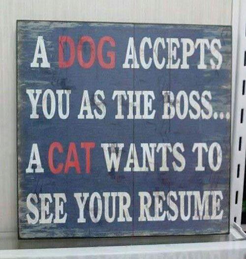 A dog accepts you as the boss. A cat wants to see your resume. #Caturday #cats #dogs.