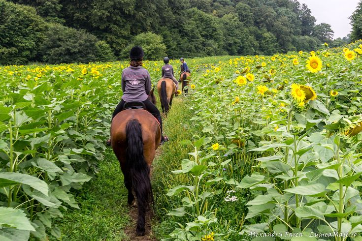 Horse riding in Transylvania, near Sighisoara, at Cross Country Farm #ecoromania #pecai