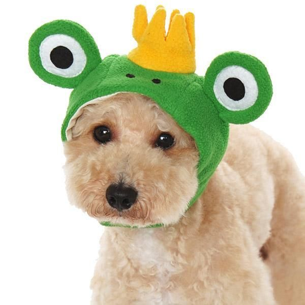 Prince Frog Dog Hat Largest Online Dog Boutique In 2021 Dog Hat Frog Hat Dog Boutique
