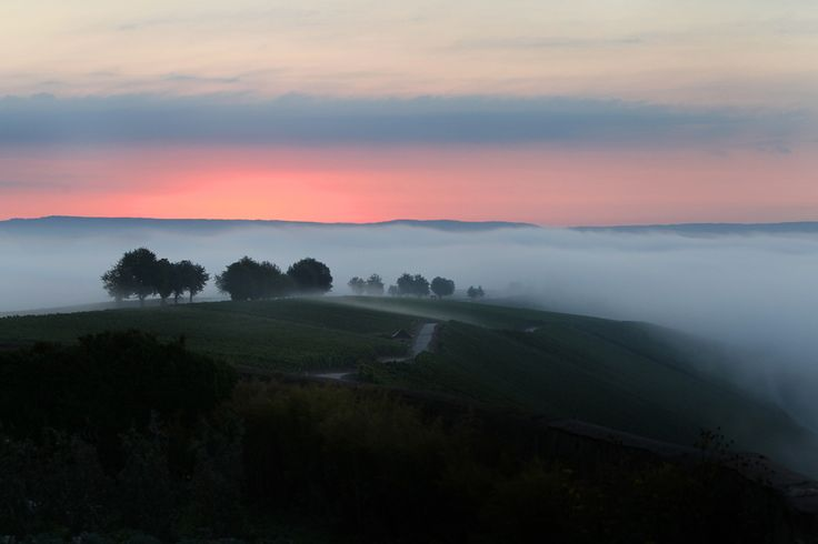 Best nature pictures of 2012 - The Big Picture - Nat'l Geo == #44 Morning fog over Escherndorf GER