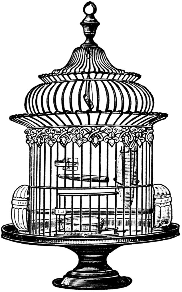 Antique bird cage drawing - photo#2