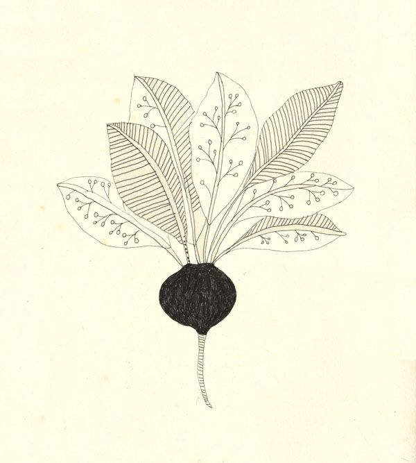 A radish. by Katt Frank