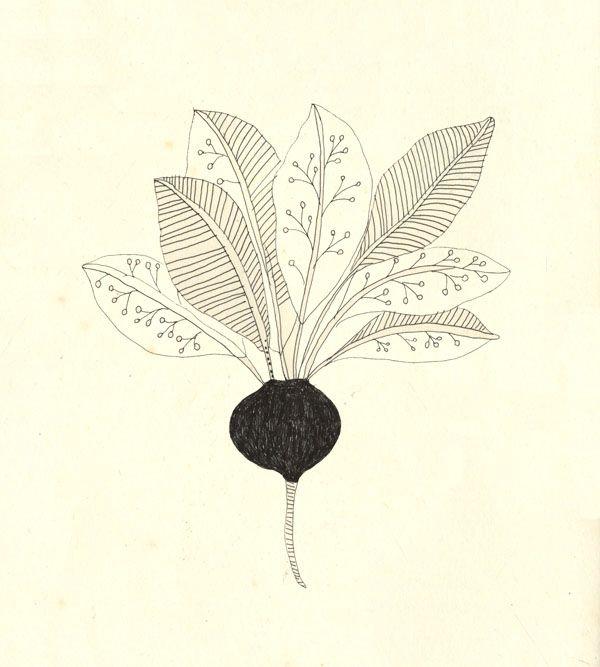A radish. by Katt Frank #whimsical #illustration repinned by AMG DESIGN www.amgdesign.nz