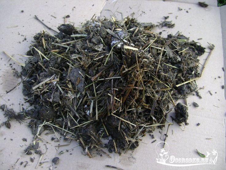 Какие удобрения вносить осенью    Навоз и помет    Очень ценный вид удобрений, отвечающий за плодородие почвы. Свежий навоз или птичий помет вносят под перекопку — непосредственно под растения его вносить нельзя, он может сжечь корни. Норма внесения навоза: от 300 до 400 кг на сотку с интервалом в 2-3 года.    Зола    Целый перечень ценных микроэлементов содержит зола, полученная от сжигания сорняков, ботвы, веток. На 1м² расходуют до 1 кг золы. Как и навоз, ее вносят под осеннюю перекопку…