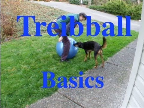 How to Teach The Basics of Treibball or Push Ball: A Great New Game for Energetic Dogs!