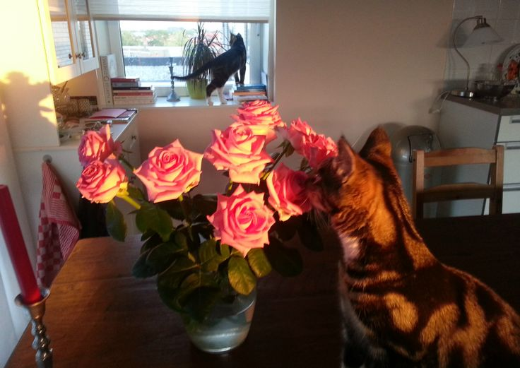 just love the smell of some lovely pink roses!