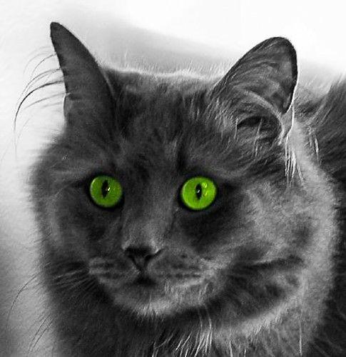 cat ibuprofen poisoning
