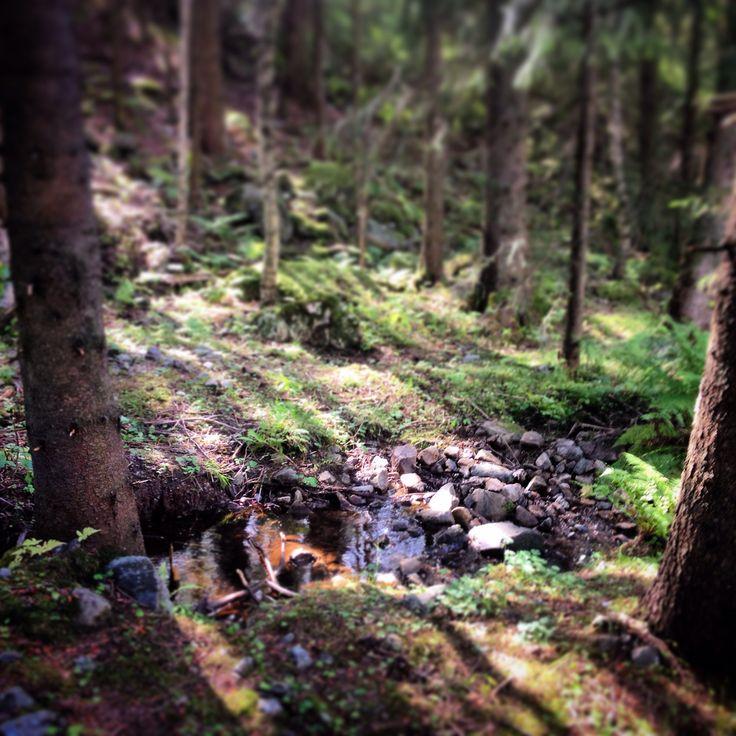 Forest sun.