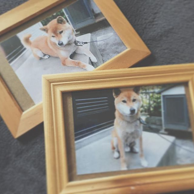 * すごいプライベートですが、 今日は愛犬の命日でした。 幼稚園のころから15年間… ペットって本当に家族だと思います! 愛犬が居なくなって本当に存在の大きさを知りました。 1年前に見つけた歌が本当に共感できて ぜひペットとお別れした方 今飼われてる方に聞いて頂きたです! エイジアエイジアの 「犬のうた〜ありがとう〜」です いつ聞いても涙がでてしまいますが やんちゃな子犬時代や おじいちゃんになって散歩にいけないなど 沢山の思い出を思い出します! こういう投稿は色々な意見あると思いますが 私は愛犬を思う大好きな気持ちは 共感出来ると思い投稿させて頂きます! #愛犬#いつもありがとう #エイジアエンジニア #犬のうた#犬のうたありがとう