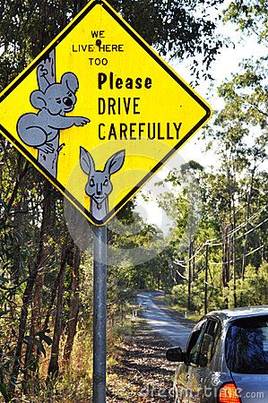 Unique Australian wildlife road sign of koala by Lifeontheside, via Dreamstime