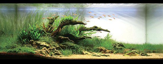 Next planted Aquarium Idea