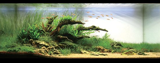 Next planted Aquarium Idea