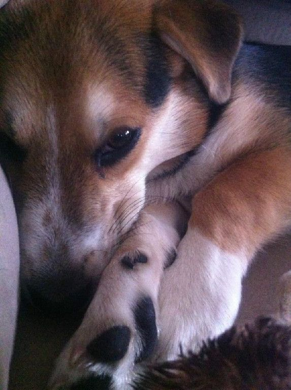 Jackson adopted April 2013 | Happy tails, Dogs and puppies ...