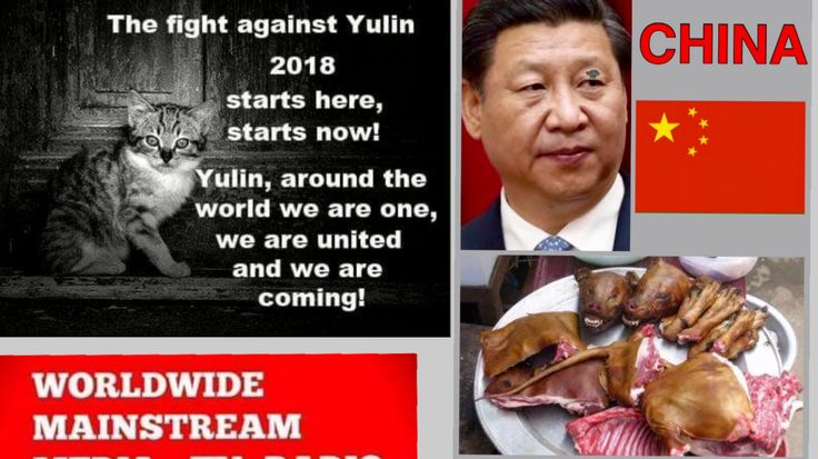 Dutch government: Get media attention for Yulin! https://www.change.org/p/dutch-government-get-media-attention-for-yulin?utm_campaign=crowdfire&utm_content=crowdfire&utm_medium=social&utm_source=pinterest
