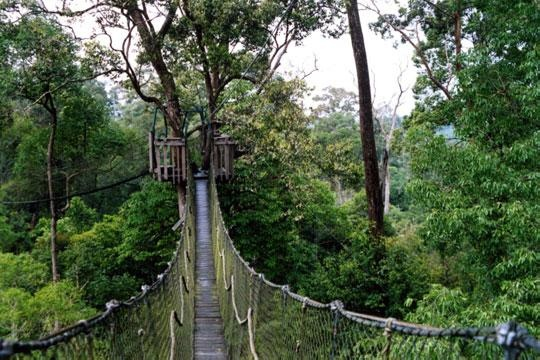 1500 hektar Bukit bangkirai Balikpapan