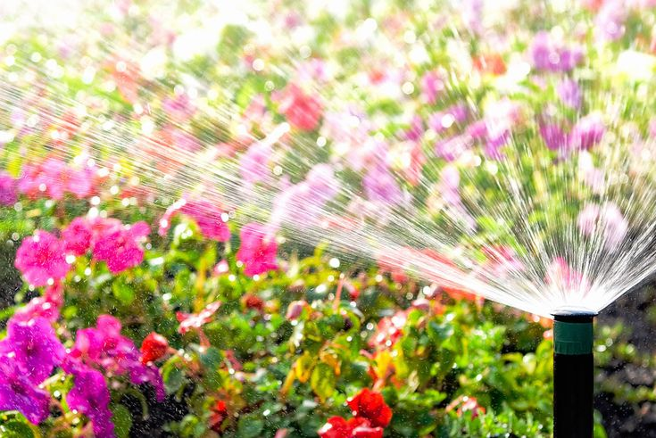 By installing an irrigation system in your garden, you can become more water wise and water efficient by directing it straight to the roots of multiple plants. Best Sprinkler, Dream Garden, Home And Garden, Garden Fire Pit, Water Wise, Back Gardens, Irrigation, Better Homes And Gardens, Fruit Trees