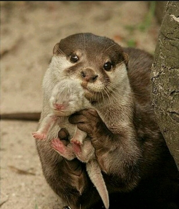 Wat a cute otter with a baby