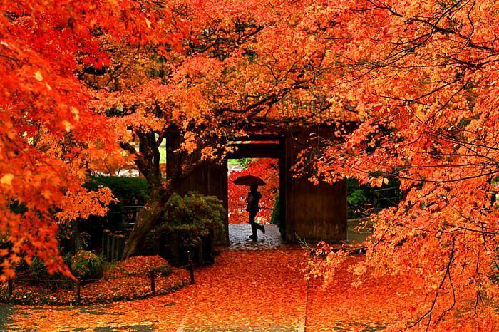 深まる秋の空気を肌で感じる紅葉名所で天台宗の古刹である基山町の大興善寺では、契山ふもとの大興善寺契園を中心に、晩秋の美しく染まった500本のモミジの紅葉が楽しめます。 大興善寺の紅葉の見どころと魅力 大興善寺は奈良時代に行基菩薩が開いた、由緒あるお寺です。その後平安時代に火災で全焼するも、慈覚大師円仁和尚が再興して「大興善寺」と名づけられました。また、比叡山の末寺でもあります。別名「つつじ寺」と知られてもいます。 山門をくぐり、眼前に展開する境内の風情に、まず歓声が上がります。藁葺き屋根の本堂と、周りを包む紅葉とのコントラストがすばらしいものです。見上げる紅葉、見下ろす紅葉、しかも陽の当たる方向や雲の動きと共に色彩が微妙に変化していく、情緒たっぷりな園内の景観は、見る人を魅了します。日が落ちて次第に輝きを増す、ライトアップの幻想的な光の世界も、大きな魅力です。…