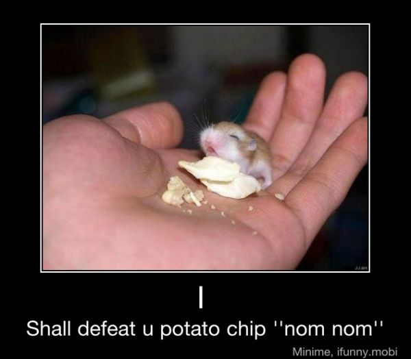 I shall defeat you potato chip!Potatoes Chips, Funny Things, Robo Dwarfs Hamsters, Nomnom, Baby Animal, Funny Stuff, D Awwwwww, Nom Nom, The One