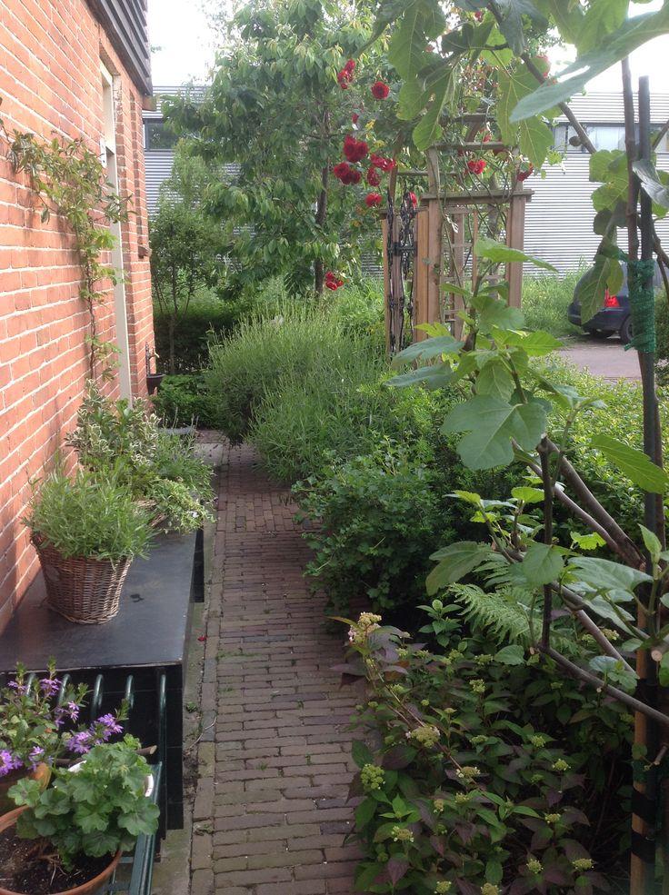 Rozenboog vol met rode rozen in de zijtuin van mijn kleine tuin