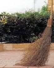 Uno de los muchos nombres populares que recibe esta planta es el de escoba o retama de escobas, porque con sus ramas se acostumbraba a fabricar escobas (los