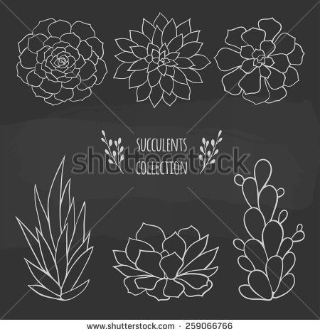 set of succulents hand drawn on a chalkboard