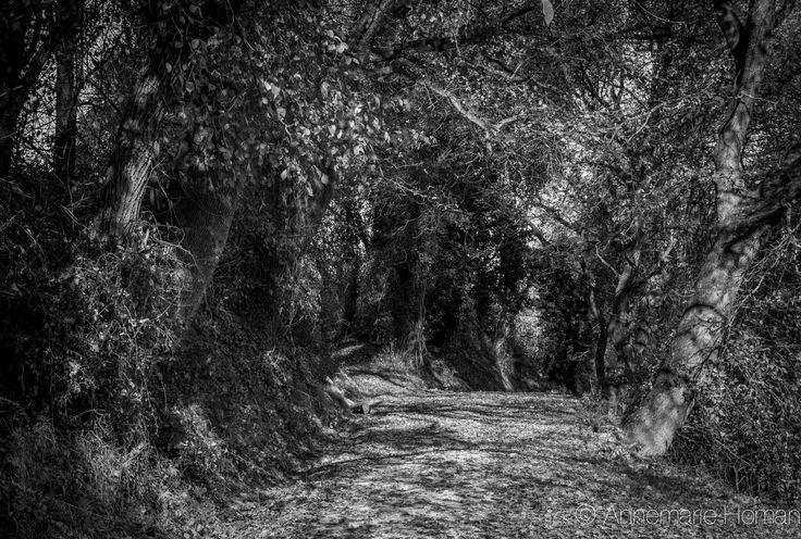 A road near Serra de'Conti (AN)