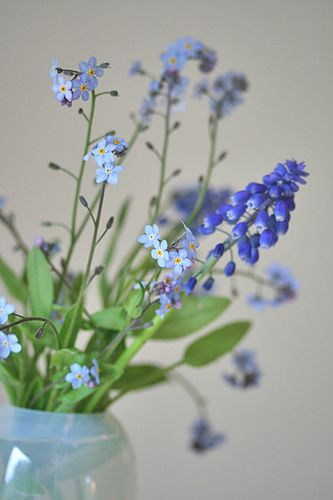 two favorites in one vase: forget-me-not + grape hyacinth