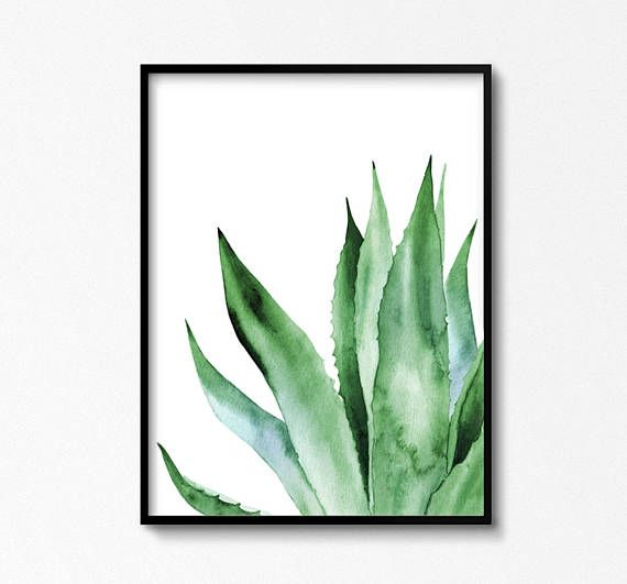 Agave Plant Art. Tropical watercolor leaves. Leaf botanical works of art. Printable posters. ARTbyASolo illustrations. Green Office Wall Decor