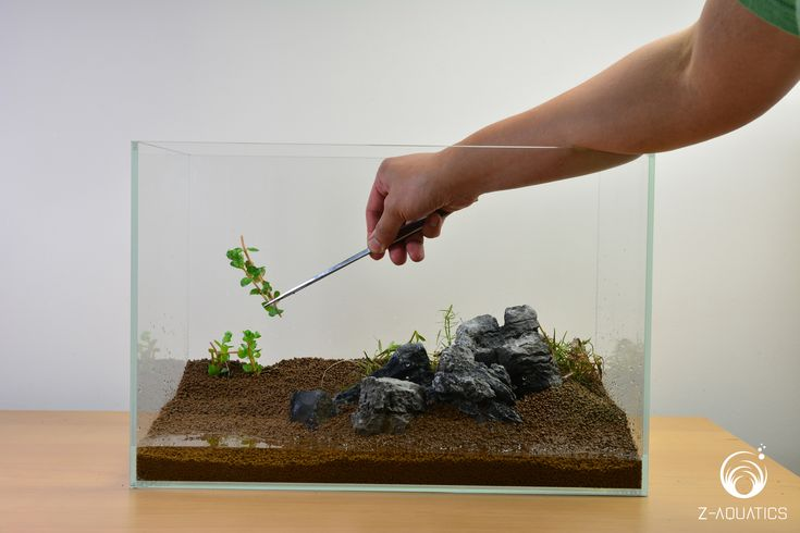 #StepByStep A Guide for Setting Up a Basic Planted Aquarium. Step by Step . Begin planting. Cut stem plants into smaller pieces. Do not be concerned about whether or not it has roots, as stem plants will develop root systems very quickly. It is recommended to cover your tank with as many plants as you can. Plants will absorb excess nutrients and speed up the cycling process. A good set of tweezers is handy to keep the plants anchored in the substrate.
