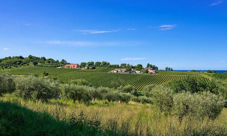 Le due anime dell'Azienda vinicola marchigiana : BOCCADIGABBIA http://www.vinodabere.it/le-due-anime-dellazienda-vinicola-marchigiana-boccadigabbia/