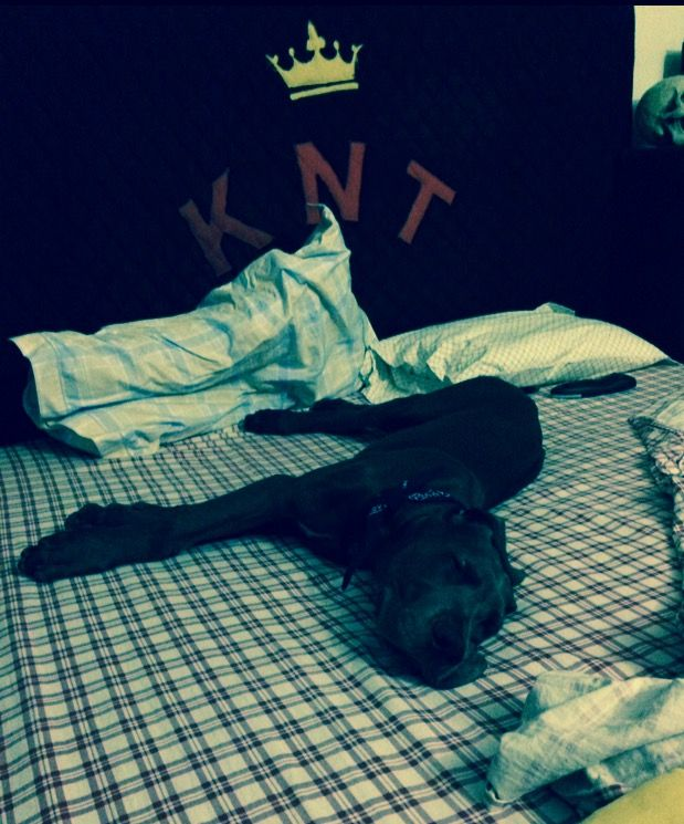 Do I have space to sleep here too ?? # Great Dane
