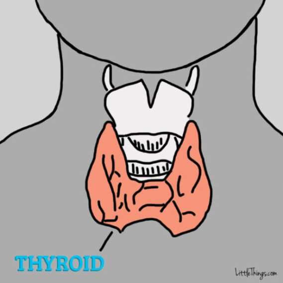 12 Symptoms overlooked with THYROID PROBLEMS.