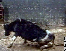 """All the Cows Go Mad — The Latest on Mad Cow Disease 