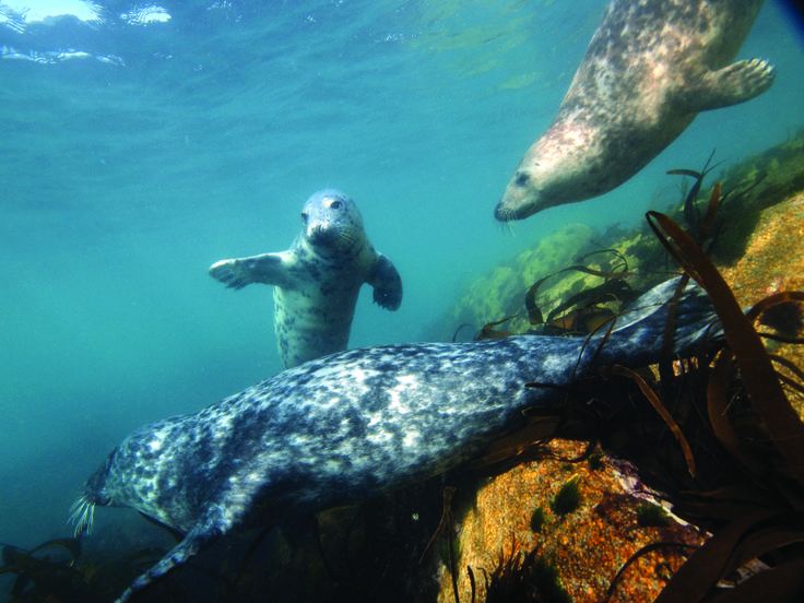 Scilly seals - Tim Allsop Photography