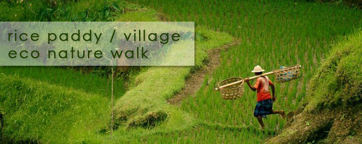 rice paddy walk