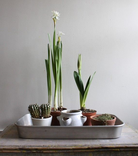 Few pots, jars, mugs and so on. Add seasonal and non seasonal plants, some with height and some with color. Maybe few interior design objects or rocks from the garden. Gather on a tray and place it on somewhere to enjoy it. Done and done. ★ Grow Your Home Alive at YourFavouritePlace.com ★