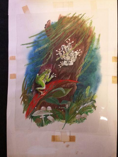 Animals of the Night TREE FROG Original 1960s Book Illustration Artwork