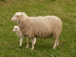 http://stadoowiec.pl/wypas-owiec-jozefow/