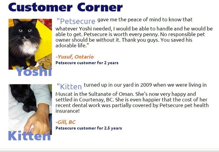 """From the Oct. 2014 edition of our """"eTails"""" newsletter: http://www.petsecure.com/etails/october-2014/#customer"""
