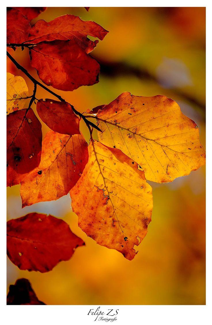 Autumn - Otoño
