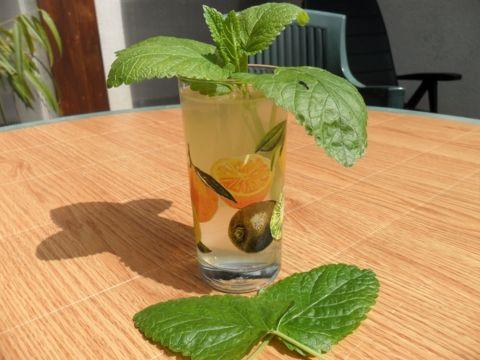 Menta-, citromfű- és gyömbérszörp - Bio-Ritmus