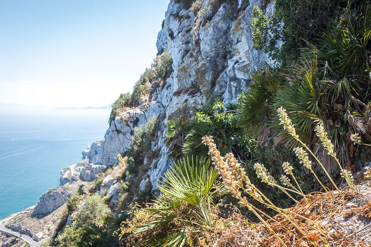 Exploring the Rock of Gibraltar: Best things to see and do