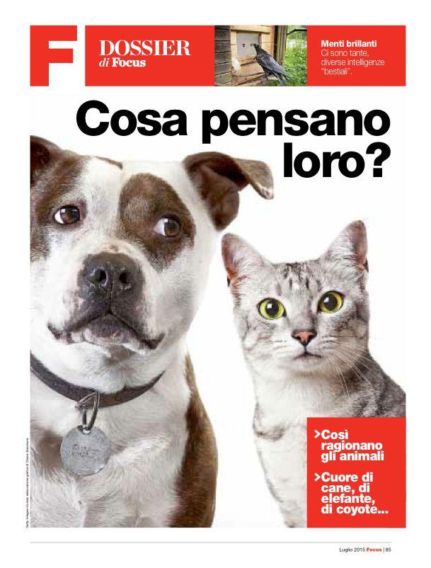 I video con i gattini fanno bene allo spirito - Focus.it --- È arrivata anche la scienza dei gattini. Dopo la ricerca giapponese che afferma che sfogliare foto di cuccioli aumenta la concentrazione e la produttività sul lavoro, ora è il turno dei video dei micini.