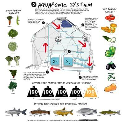 Aquaponics is a marriage of aquaculture (farming aquatic animals, like fish or prawns) and hydroponics (growing...