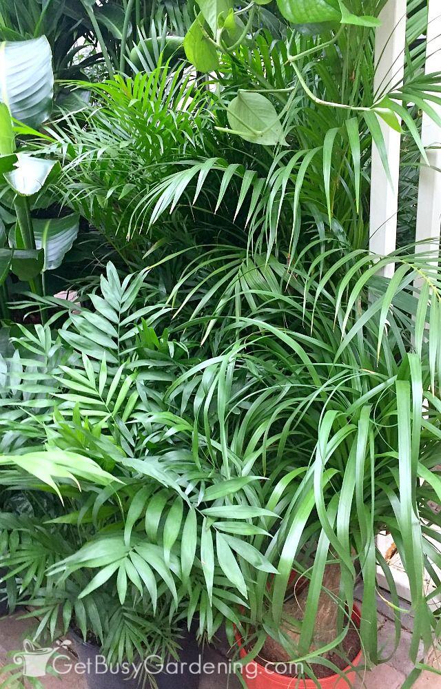 17 best ideas about tropical plants on pinterest leaves. Black Bedroom Furniture Sets. Home Design Ideas